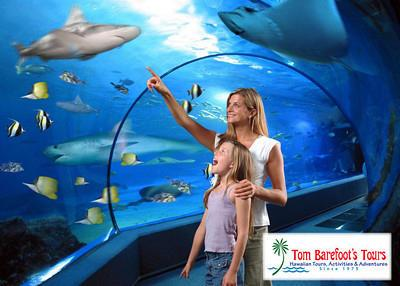 Why is Maui Ocean Center Such a Great Place to Visit With Children?