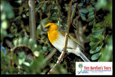 Hakalau Forest Birdwatching - Kona