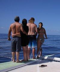 Paragon II Maalaea Whale Sail
