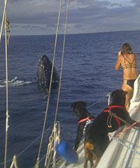 Reserve the 2.5 Hr Sailing and Whale Watch tour with Maui Ocean Charters.