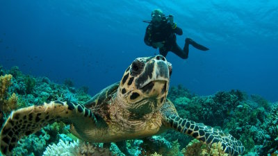 Shore Diving and Snorkeling on Oahu