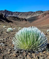 Haleakala Daytime Summit and Zip Tour
