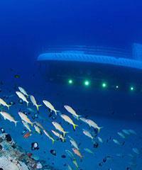 Maui Submarine and Snorkel Tour Combo