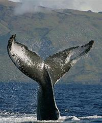 Whale Watch Cruise