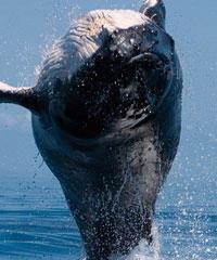 Whale Watch Discount - Maalaea - Pacific Whale Foundation
