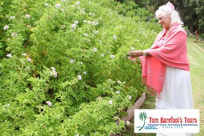 You will start by gathering the aromatic plants.