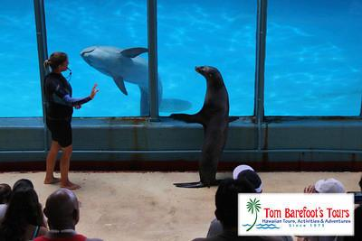 Swim with dolphins at Sea Life Park!