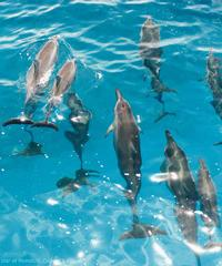 Dolphin Encounter - Sea Quest Rafting