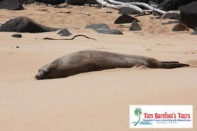 Monk Seals Frequent Donkey Beach