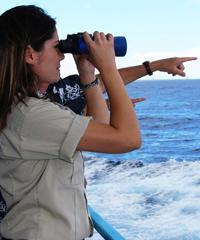Early Bird Whale Watch  - Star of Honolulu