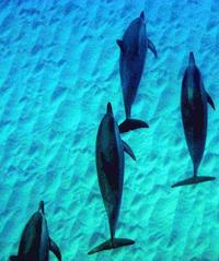 Early Morning Dolphin Tour - Dolphin Excursions