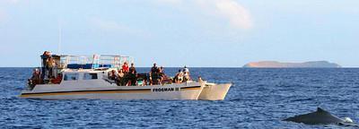 Malolo Sunset Whale Watch