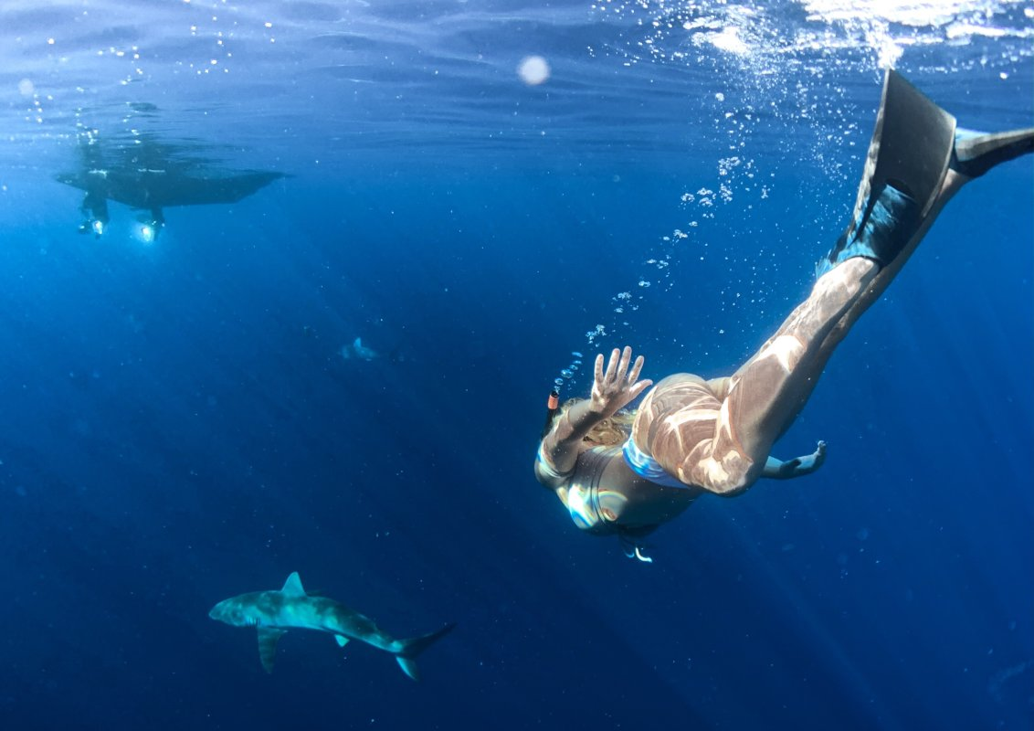 Tom Barefoot's Tours - swim with sharks. Step outside your comfort zone.