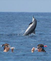 Morning Dolphin Snorkel Tour - Hang Loose Boat Tours