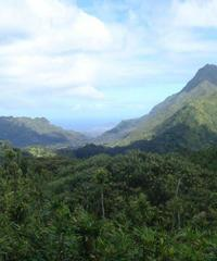 Oahu Volcanic Rainforest Hike