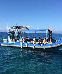 Kona Nai'a Dolphin Snorkel