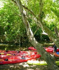 Kayak Adventure - Wailua River Guides