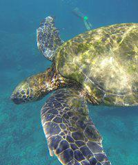 Makena Turtle Town Adventure - Maui Kayaks