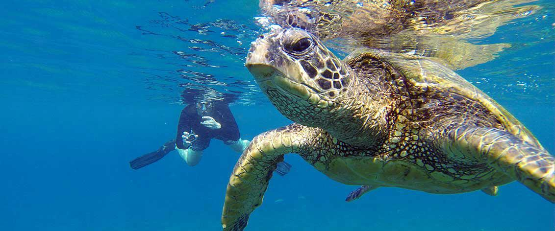 Maui Snorkel Charters are the most popular activity on Maui.