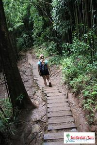 Manoa Falls Waterfall Hike Video