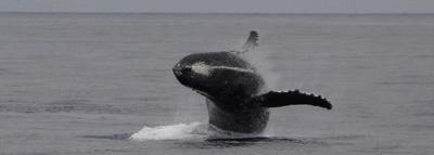 Blog Articles and FAQ's about Whale Watching
