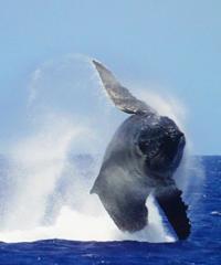 Premier Whale Watch