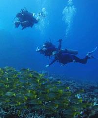Certified 4 Tank Lanai / Turtle Reef