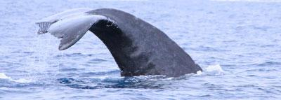 Travel Blog #162 - Visiting Maui's Whale Sanctuary with the Scotch Mist