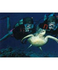 Expedition Dive Days
