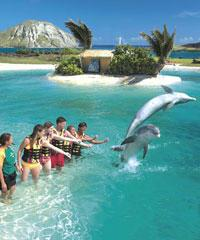 World Class Marine Park, World-Class Marine Attraction - Swim with Dolphins, Interact with the Dolph