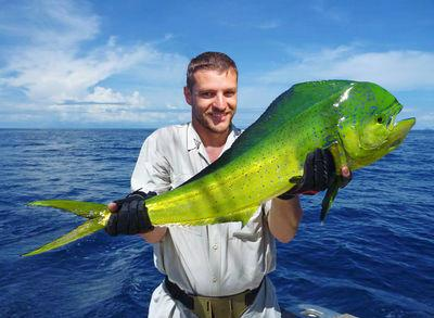 Mahi Mahi, this fish puts up a Good Fight!