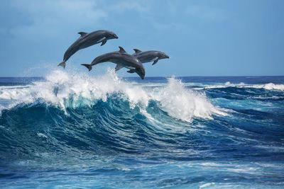 Dolphins surfing waves