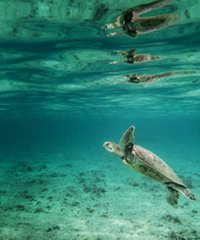 Snorkeling Hawaii is the #1 activity in the islands.
