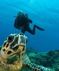 Three-Tank Dive Adventure