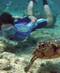 Turtle Boat Tour