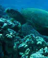 2 Tank Molokini - Turtle Town