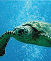 Hilton Turtle Snorkel Sail W/Lunch - Port Waikiki Cruises on Oahu