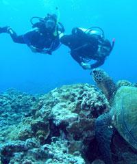 Certified 4 Tank Molokini - Turtle Reef