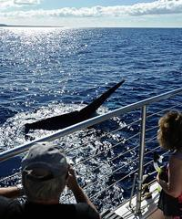 Whale Watch in the Afternoon - Kai Kanani/Makena Boat